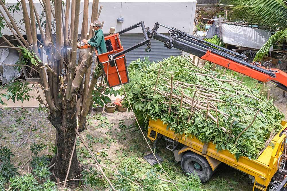 Escondido Tree Service Experts